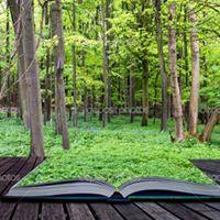 A_livre en forêt